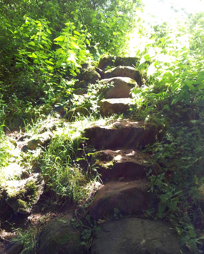 Steps going up through woodland