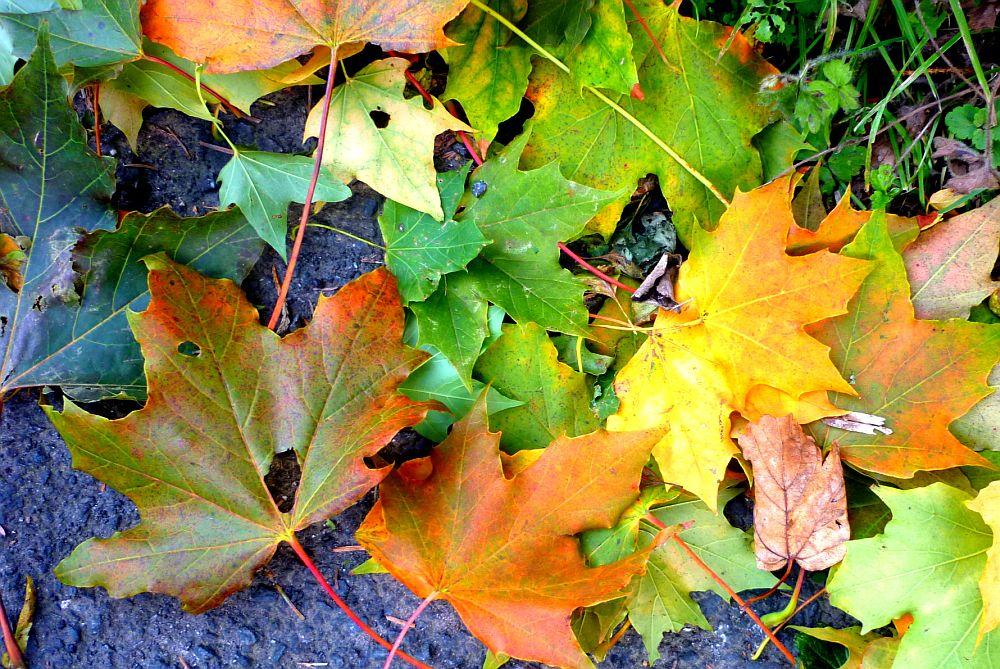 Leaves on the lane.