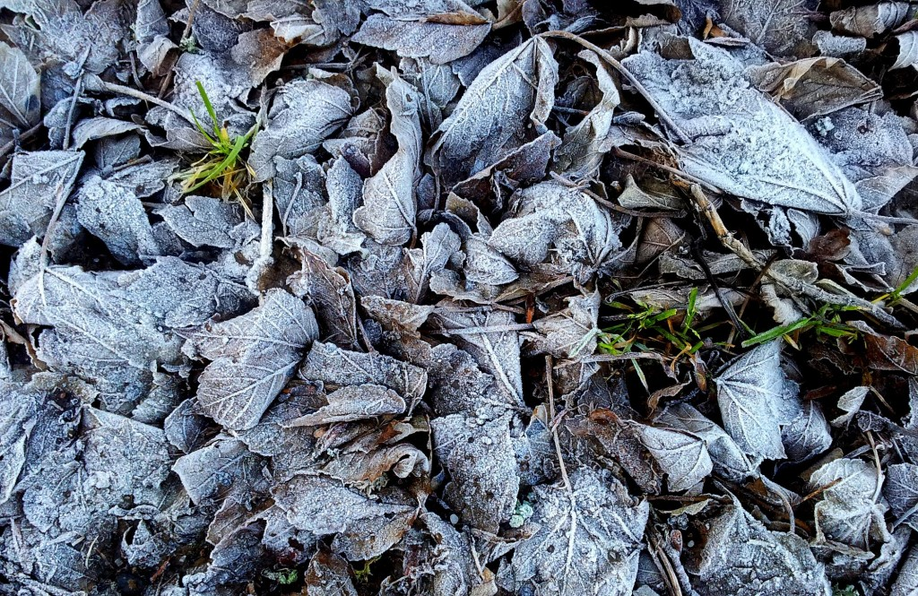 Frost with grass.
