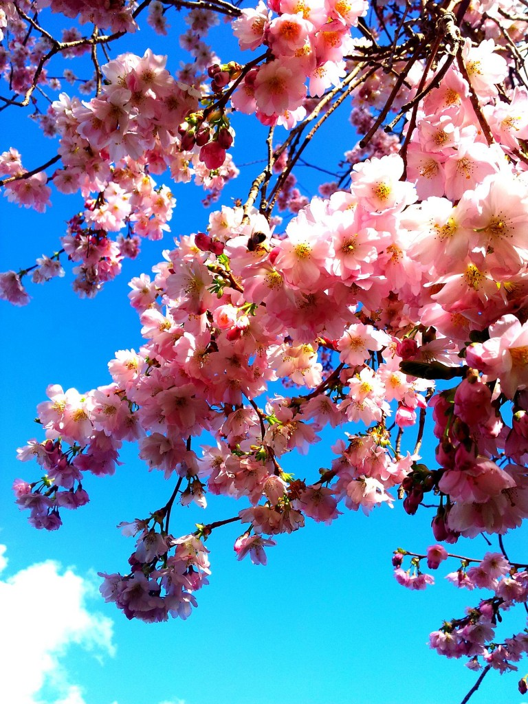 1Spring Blossom