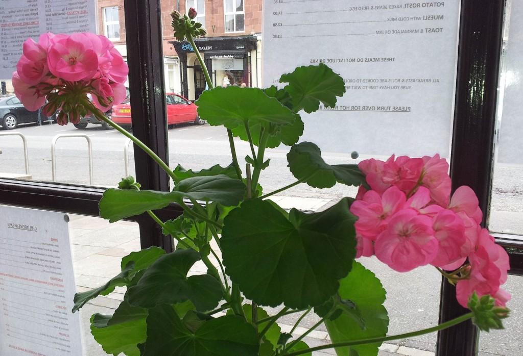 At the Pink Geranium Cafe