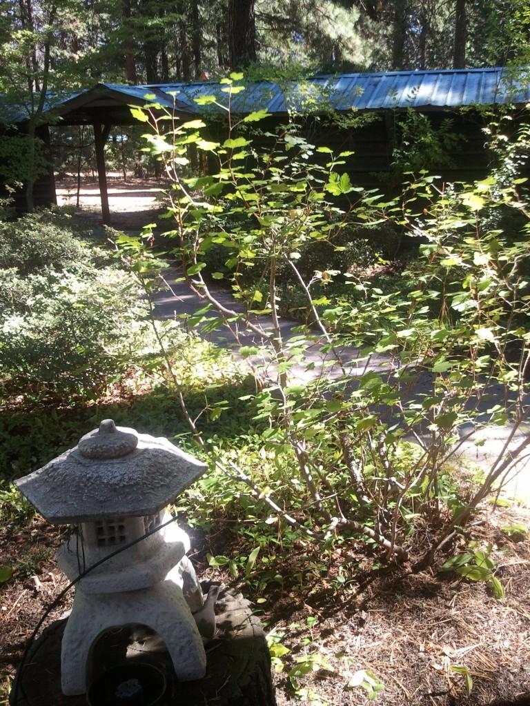 Hotei House Garden, Shasta Abbey.