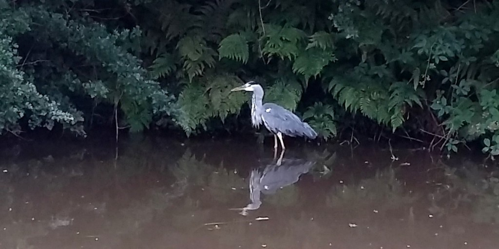 herron fishing
