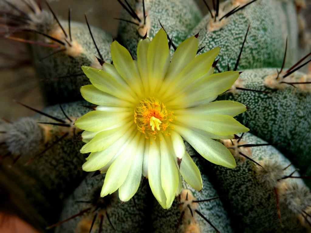 Flowers bloom in the desert.