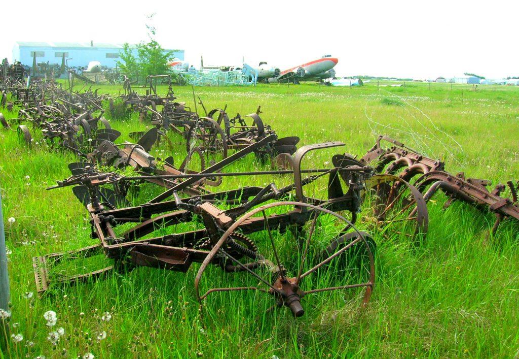 A field of faded Glory near Edmonton, Canada.