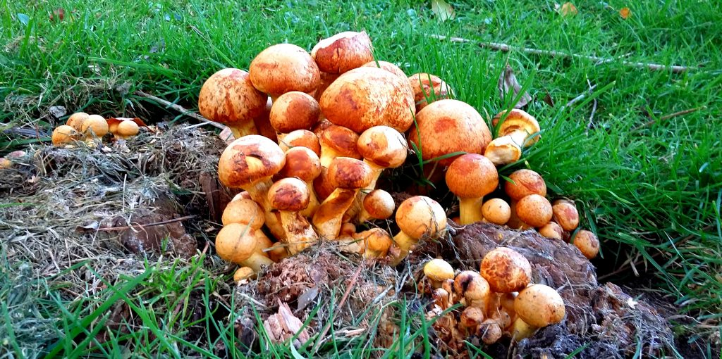 fungus-in-the-park