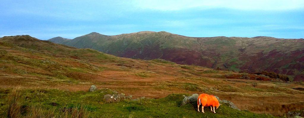 high-street-and-orange-sheep