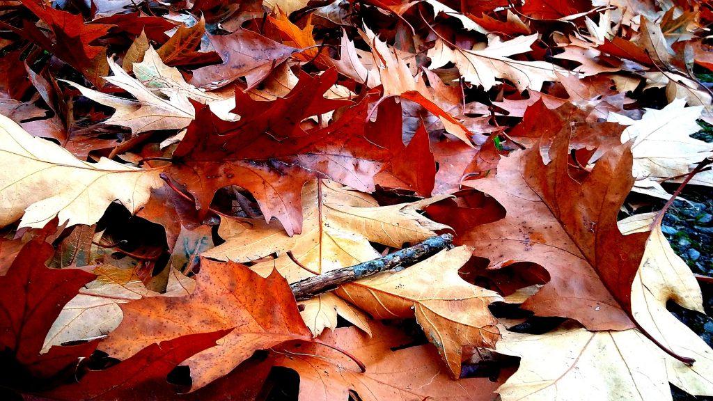 1oak-leaves-in-the-park