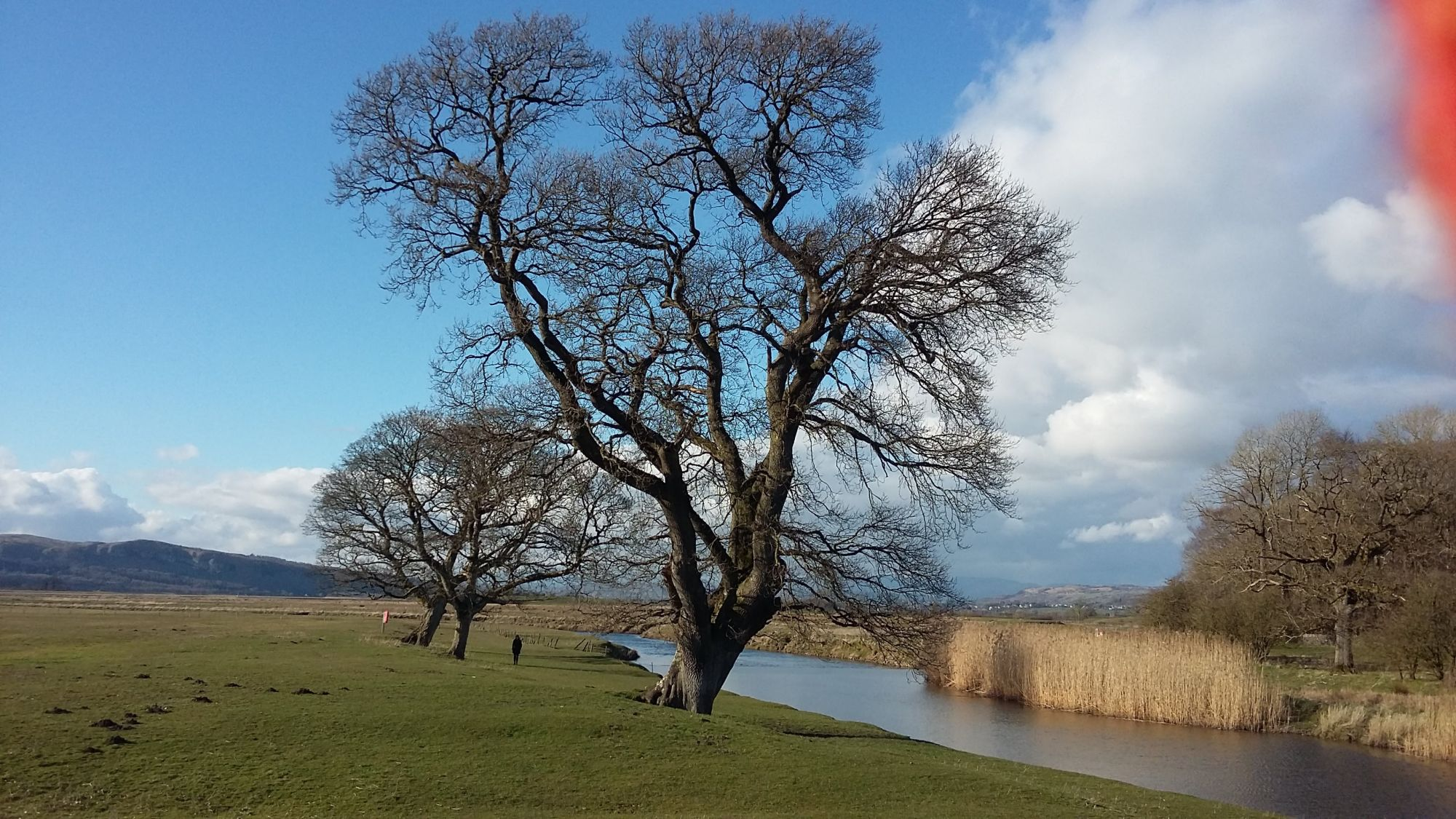milnthorpe-sands-tree