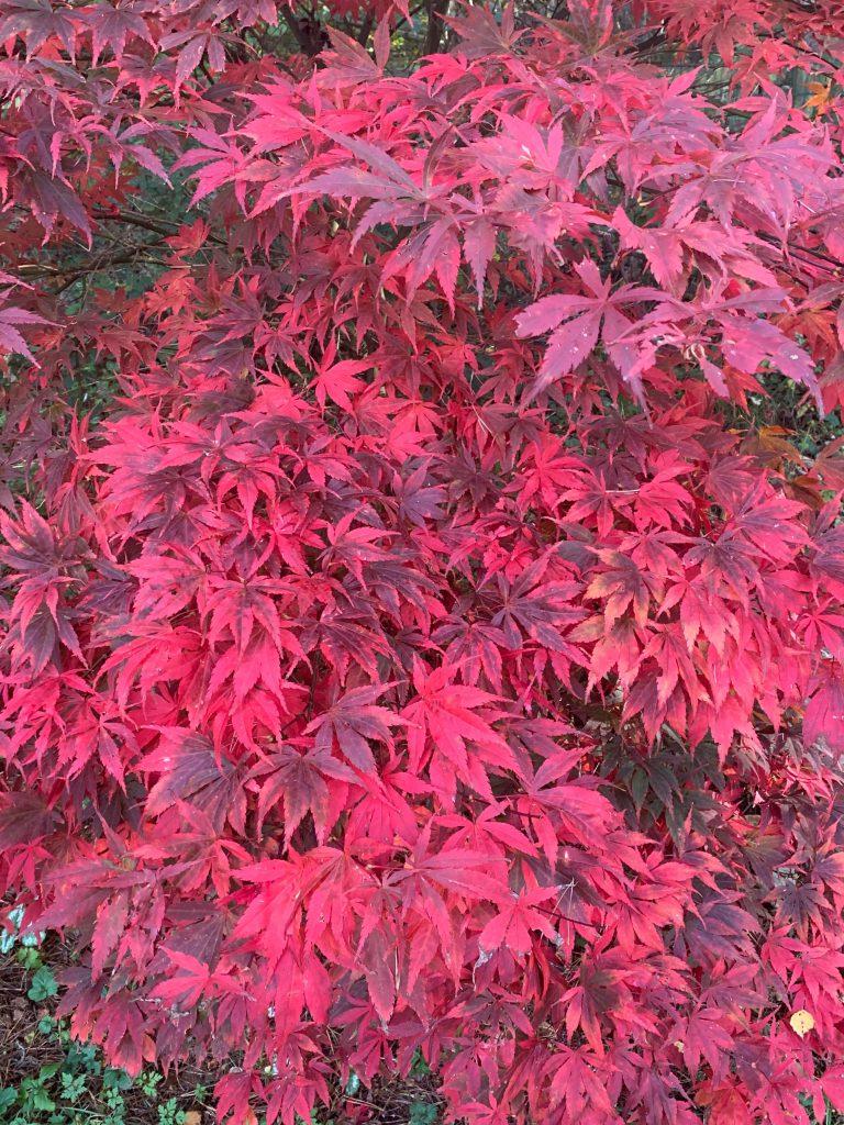 autumn-ablaze