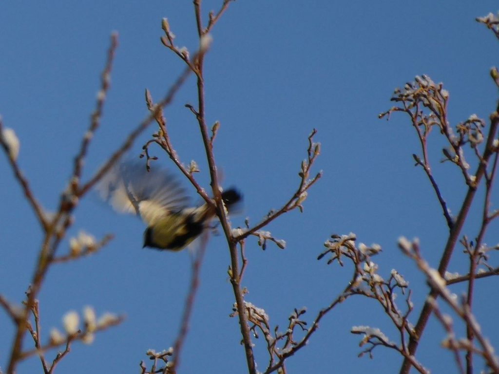 bird-in-flight-still-and-movement