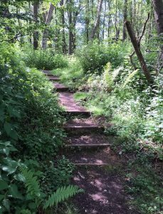 steps-in-a-woodland