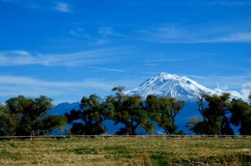 Mt_Shasta_with_trees1.jpg
