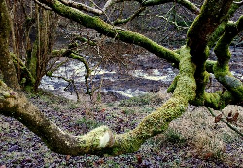 River_Eden_with_mossy_tree_trunk1.jpg