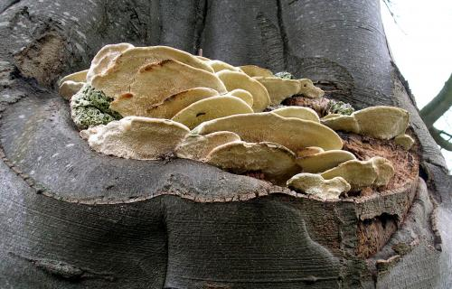 fungi_on_tree_IOW.jpg